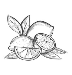 lemons hand drawn in black and vector image