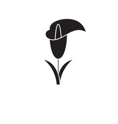 calla lily black concept icon calla lily vector image