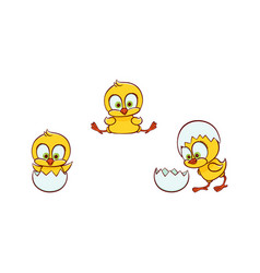 flat cute chick hatching from egg set vector image