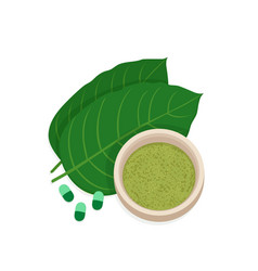 mitragyna speciosa kratom leaf vector image