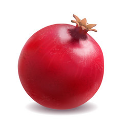 Pomegranate or garnet realistic vector