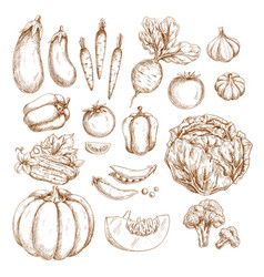 sketch farm vegetables isolated icons set vector image