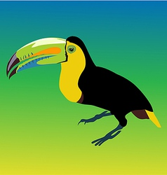Variegated tucanucu parrot vector image vector image