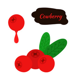 cowberry lingonberry in flat style sweet red vector image