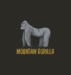 mountain gorilla engraved hand drawn in old sketch vector image