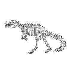 tyrannosaur skeleton sketch engraving vector image