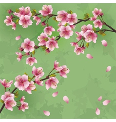 Vintage background with Japanese cherry tree vector image vector image