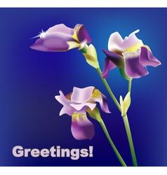 Violet iris vector
