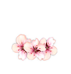 blossoming bouquet sakura red flowers vector image