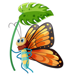 butterfly holding green leaf on white background vector image