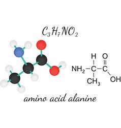 C3h7no2 alanine amino acid molecule vector