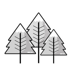 grayscale beauty natural pine tree design vector image