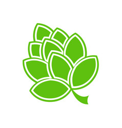 green hop flower vector image