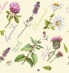 herbal pattern 3 vector image
