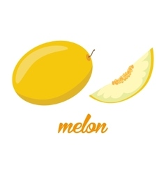 Melon fruits poster in cartoon style depicting vector