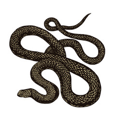 Python in vintage style on a black background vector