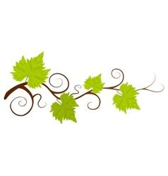 Beautiful green grape vine background vector