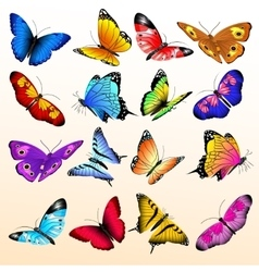 Colorful realistic butterflies big set vector image vector image