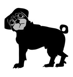 pug vector image vector image