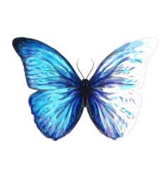 Butterfly Morpho Anaxibia vector