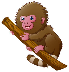 cartoon macaque monkey vector image