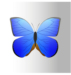 Colorful blue butterfly with abstract decorative vector