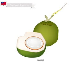 Fresh Coconut A Famous Fruit in Samoa vector