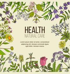 Health natural care collection medicinal herbs vector