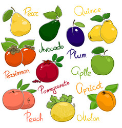 juicy ripe fruits vector image