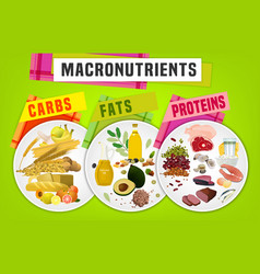 Macronutrients main food groups vector