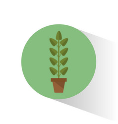 Biology plant pot school vector
