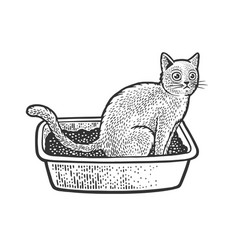 Cat sit on cat litter sketch vector