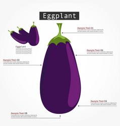 eggplant infographic vector image