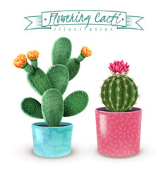 Flowering cacti realistic set vector