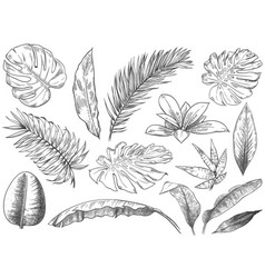 hand drawn tropical leaves sketch tropic plants vector image