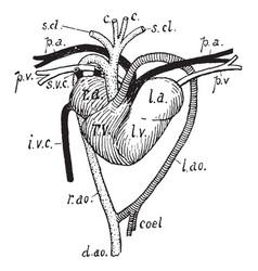Tortoise heart vintage vector