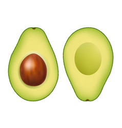 Fresh avocado with white background vector