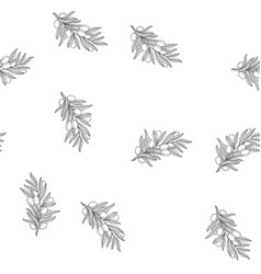 olive branch seamless pattern sketch vector image