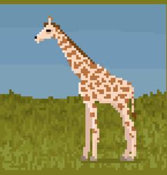 pixel giraffe on a grass vector image