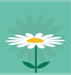 White daisy chamomile cute growing flower plant vector