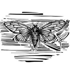 Woodcut winged cicada vector