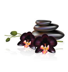 Pebbles and Spa composition vector image vector image
