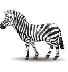 Cartoon funny zebra posing isolated on white backg vector