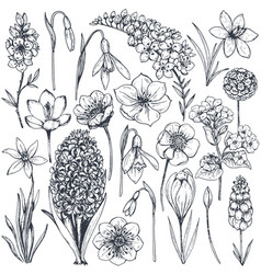 Collection of hand drawn spring flowers and plants vector