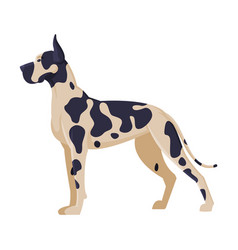 dalmatian purebred dog pet animal side view vector image