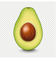 Realistic avocado with white background vector
