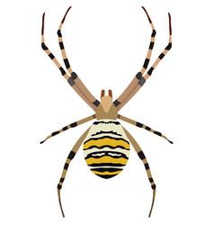 Spider argiope bruennichi vector