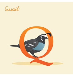 Animal alphabet with quail vector image