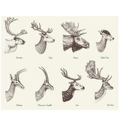 Big set horn antlers animals moose or elk vector