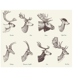 big set of horn antlers animals moose or elk with vector image